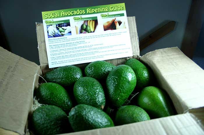 SoCal Avocado box