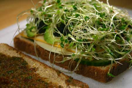 Three-Cheese Veggie Sandwich with Sun-Dried Tomato and Walnut Pesto
