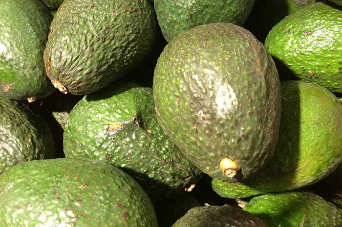 Avocados with Healthy Fat